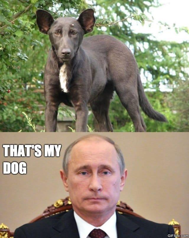 Dog That Looks Like Putin MEME