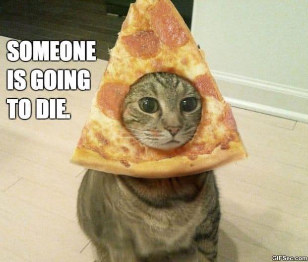 Pizza Cat MEME