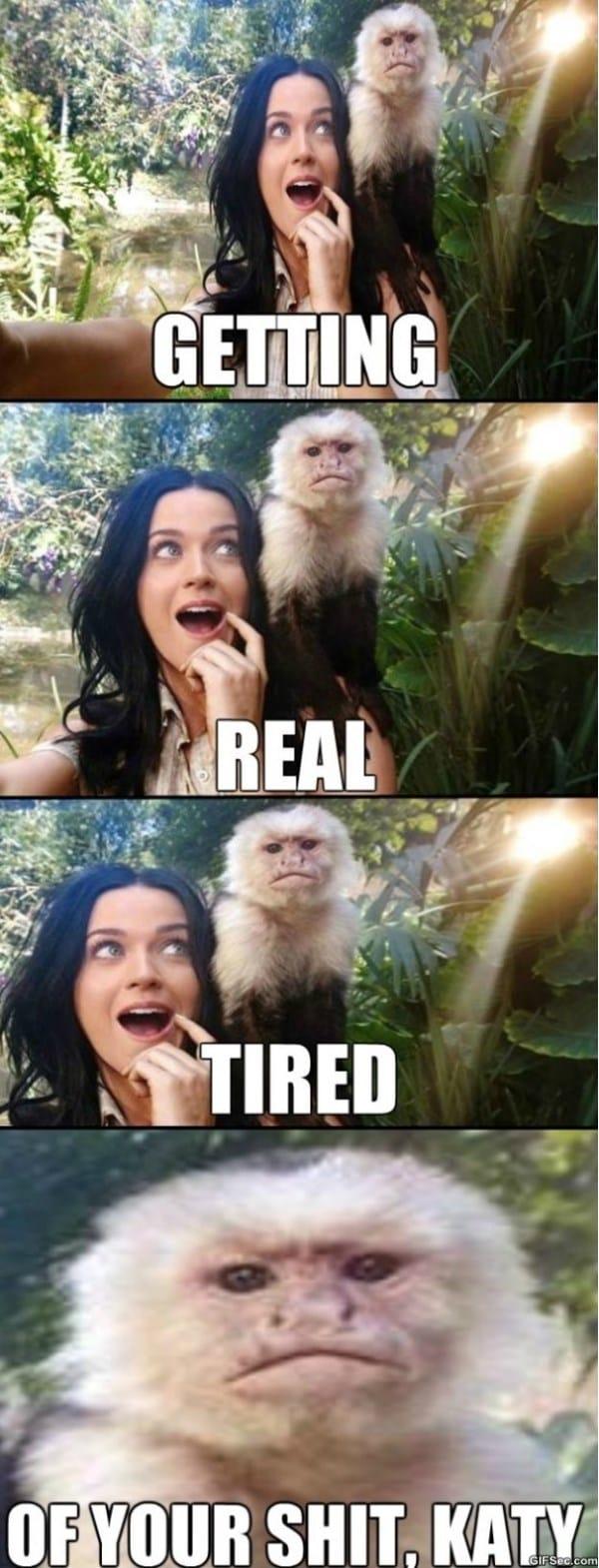 the-grumpy-monkey-rises-meme