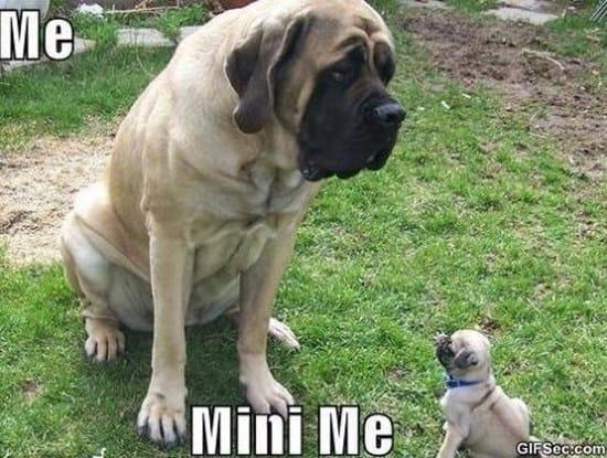 Mini me MEME