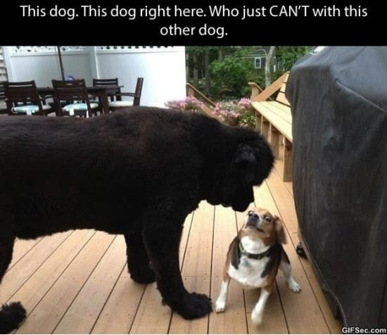 dogs-that-cant-even-handle-it-right-now-meme