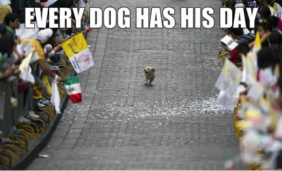 happy-dog-meme