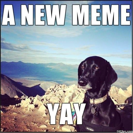 unimpressed-dog-meme