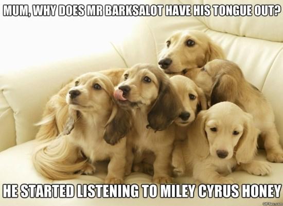 Very Funny Memes 2015 : Miley cyrus meme meme viral viral videos