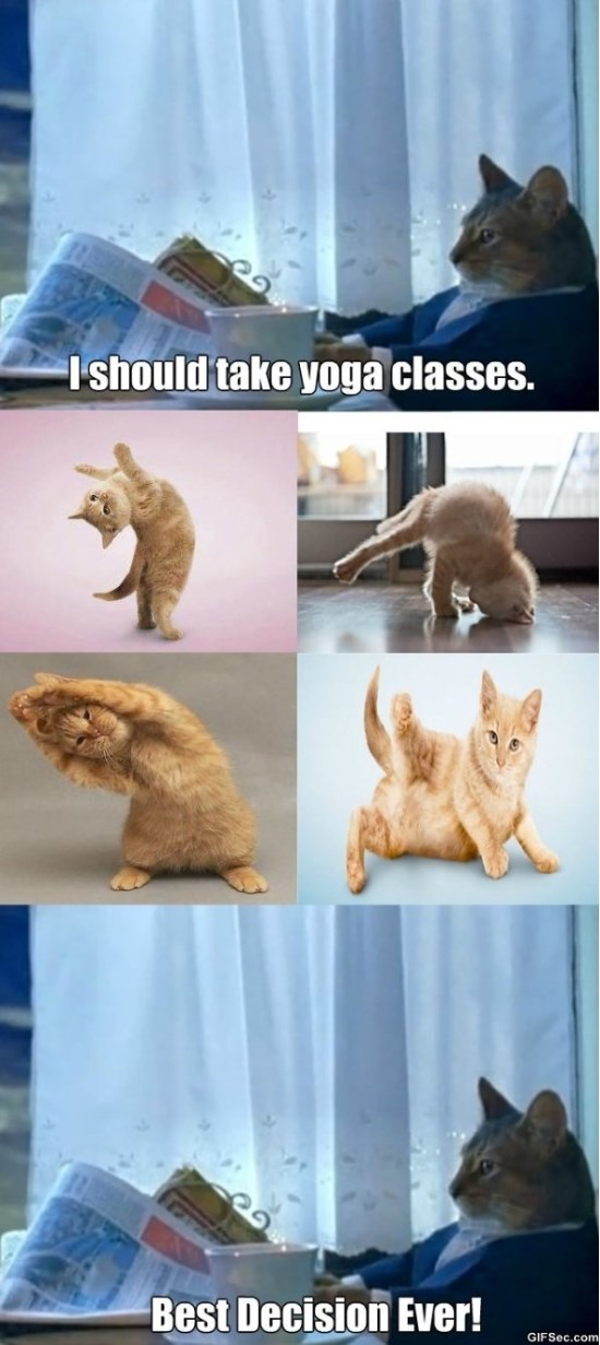 cats-and-yoga-meme-2015