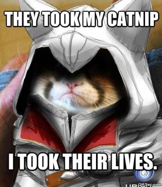 grumpy-cat-assassin-meme-2015