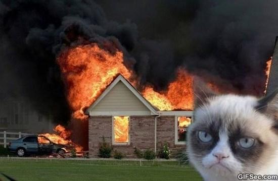grumpy-cat-meme-2015