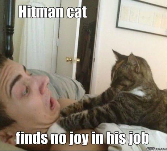 hitman-cat-meme-2015