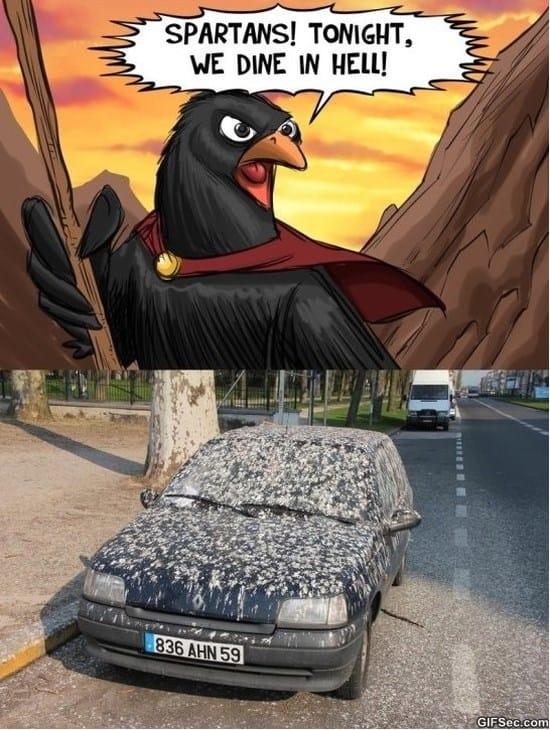 spartans-meme