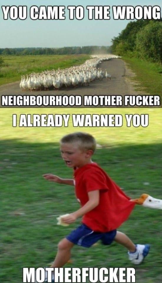 geese-in-the-neighbourhood