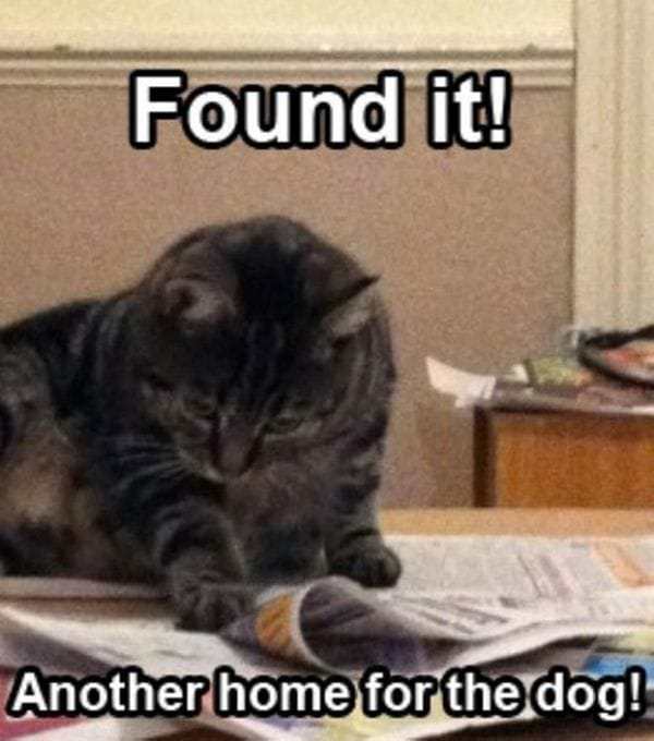 Found it – funny cat