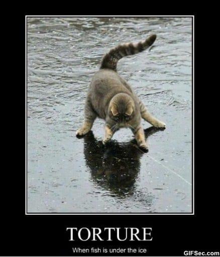 torture.jpg