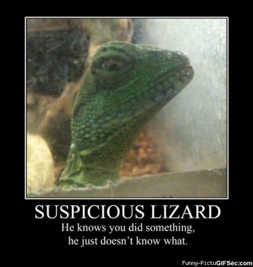 подозрительный мотивационные фотографии мем мемы LOL смешные картинки животных