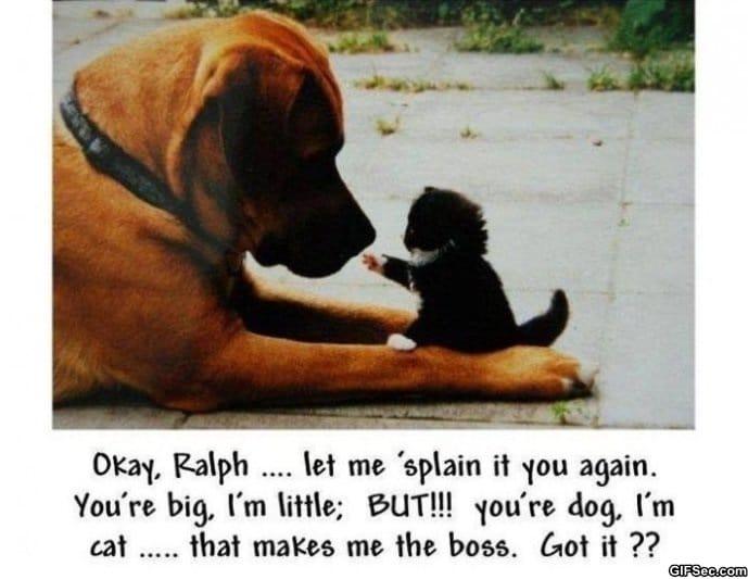 Cat-vs.-Dog.jpg