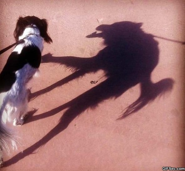 creepy-shadow