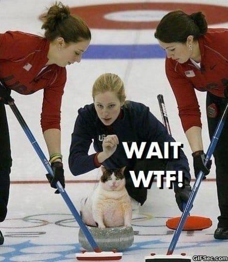 curling-cat