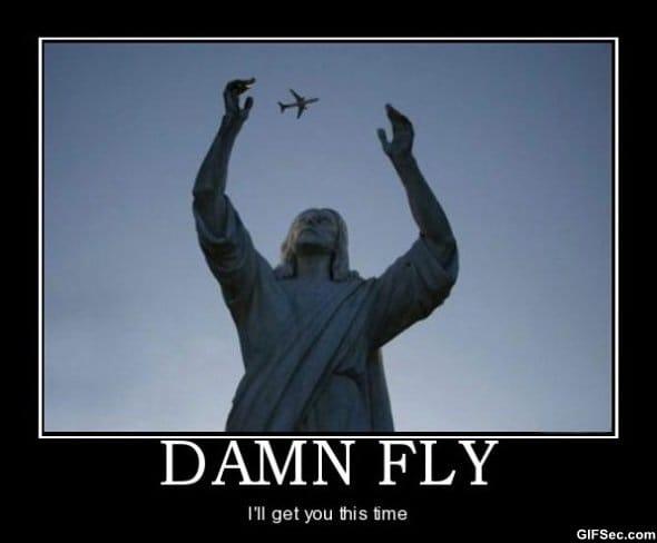 damn-fly