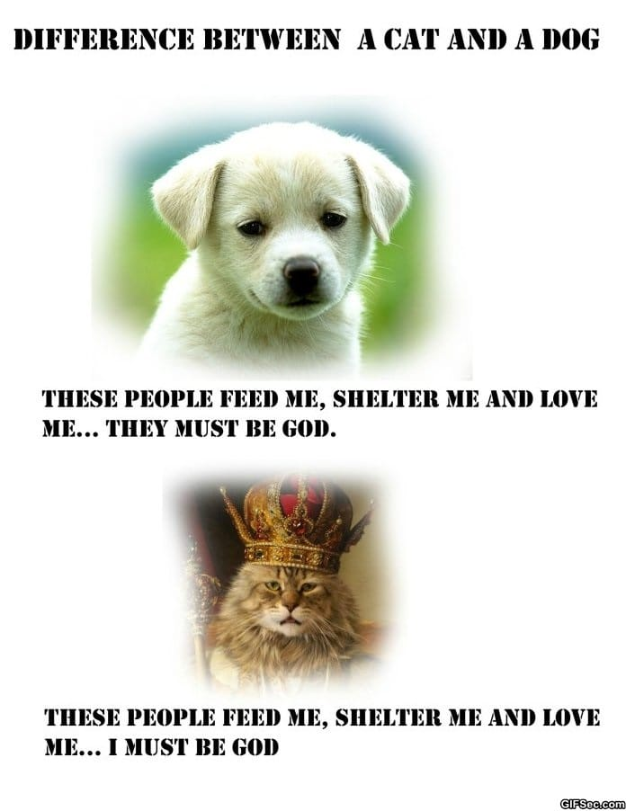 difference-between-cats-and-dogs