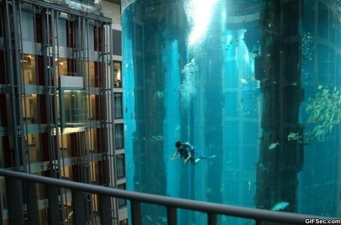 dive-in-a-hotel