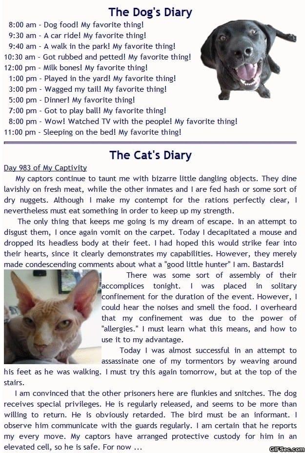 dog-vs-cat-diaries