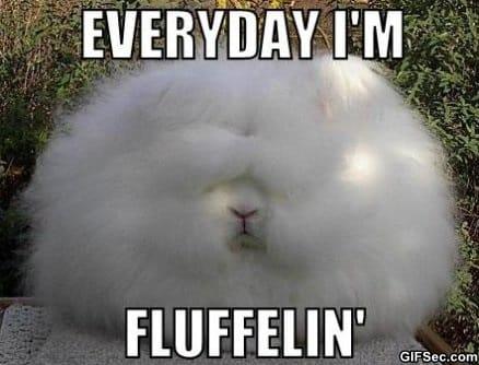 everyday-im-fluffelin