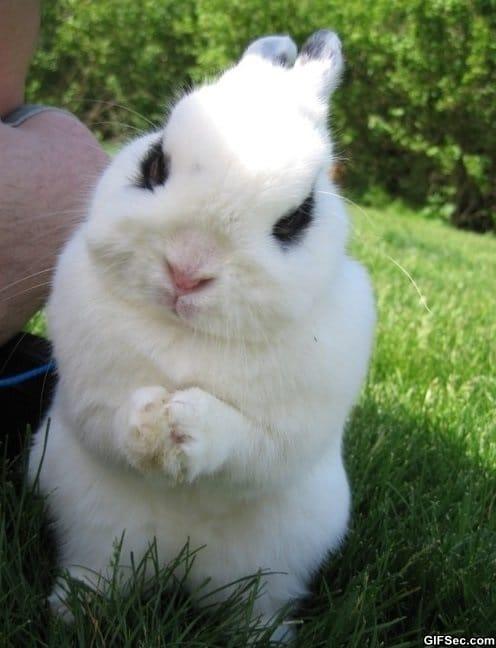 evil-bunny