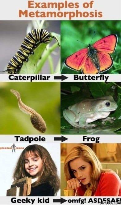 examples-of-metamorphosis