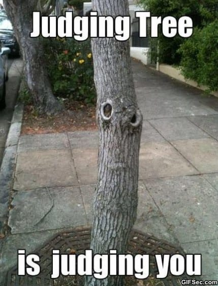 judging-tree