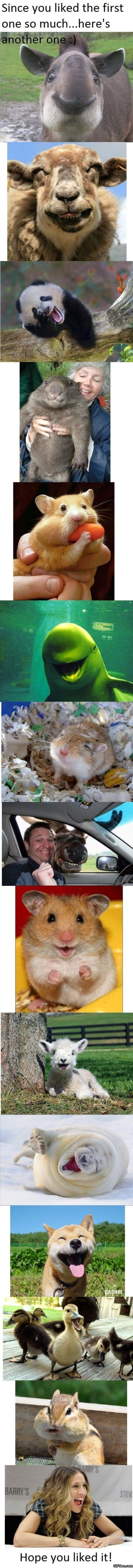 just-some-happy-animals