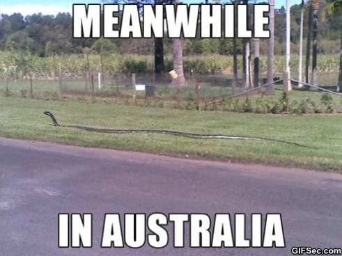 meanwile-in-australia