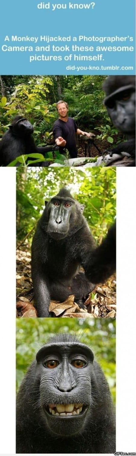 monkey-self-portraits