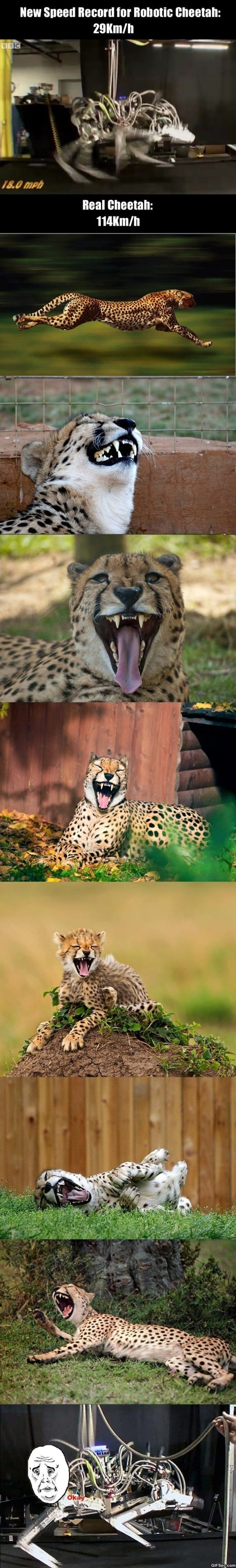 robotic-cheetah