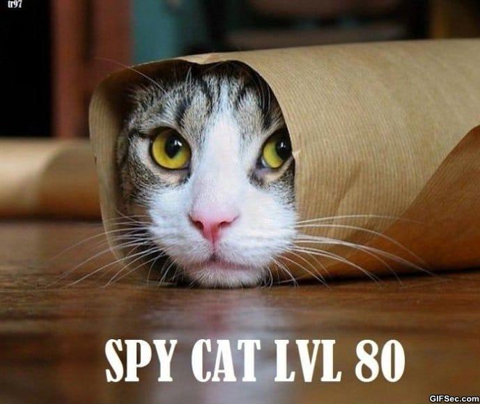 spy-cat