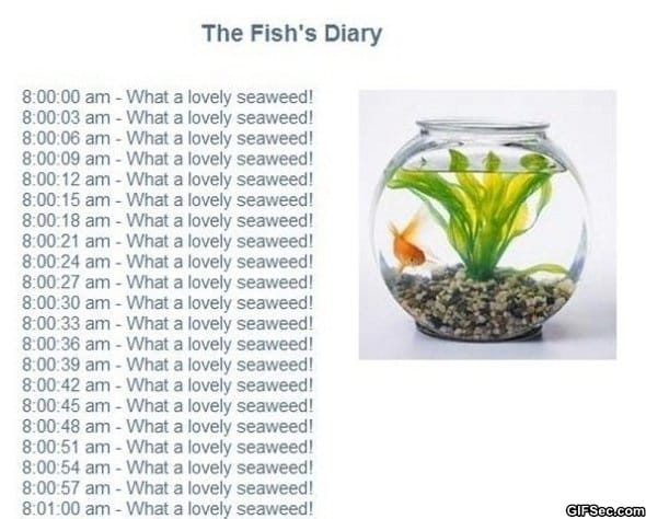 the-fishs-diary