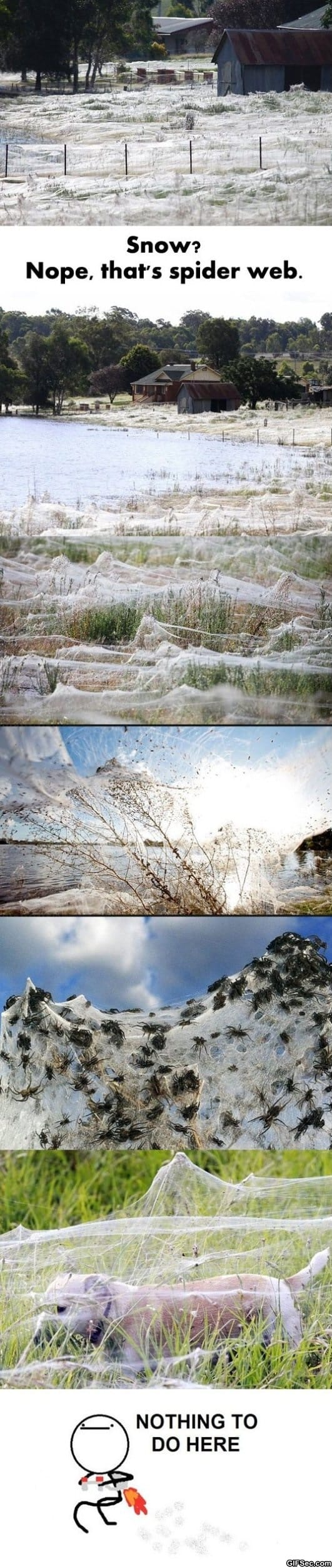 Damn nature - you scary