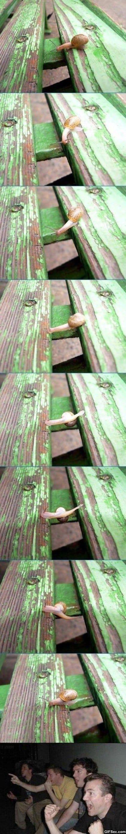 Snail parkour