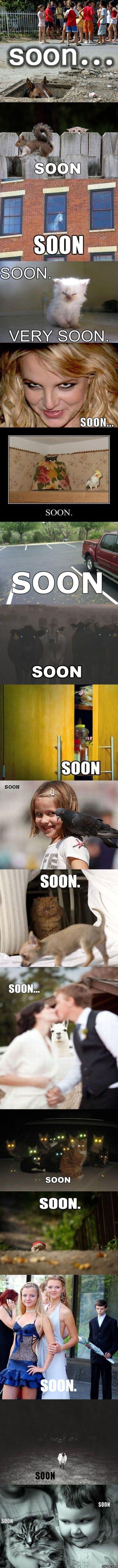 Soon MEME