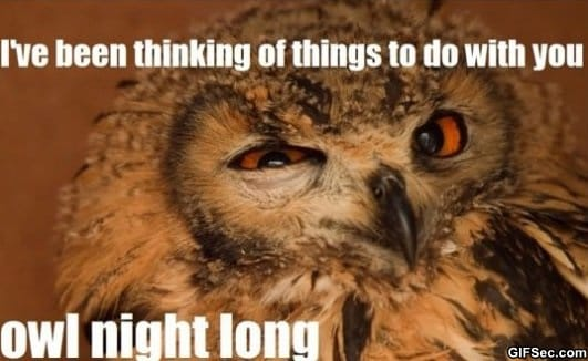 Seductive Owl