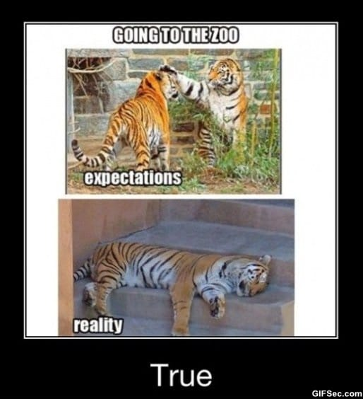 Funny Zoo Memes : The zoo g