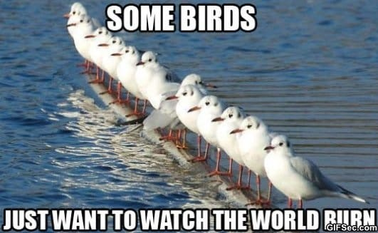 Some birds jpg