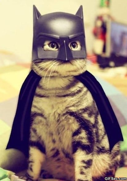 Funny Pictures – Batcat