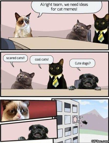 lol-cat-memes