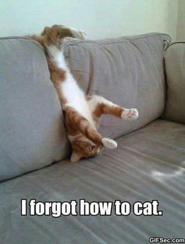 lol-cats