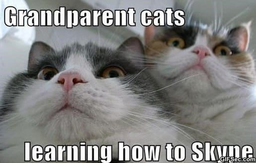 lol-grandparent-cats