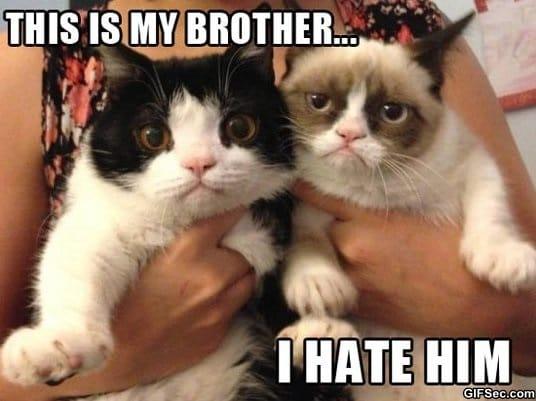 lol-grumpy-cat-brother
