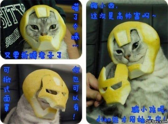 lol-iron-cat