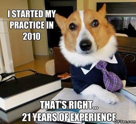 lol-lawyer-dog