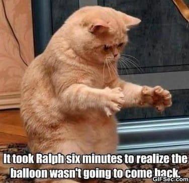 lol-poor-cat
