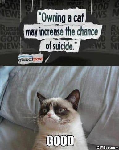 meme-grumpy-cat