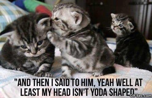 meme-mean-kitties